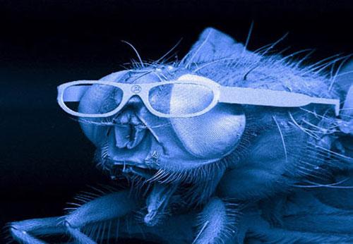 fly_glasses.jpg